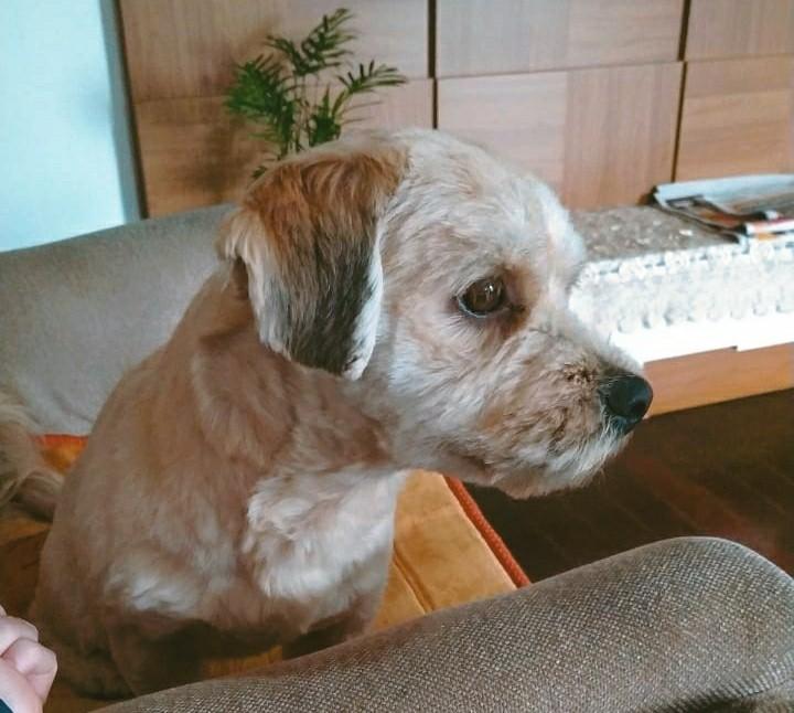 LUKE (Canino macho) Srd Pp C4
