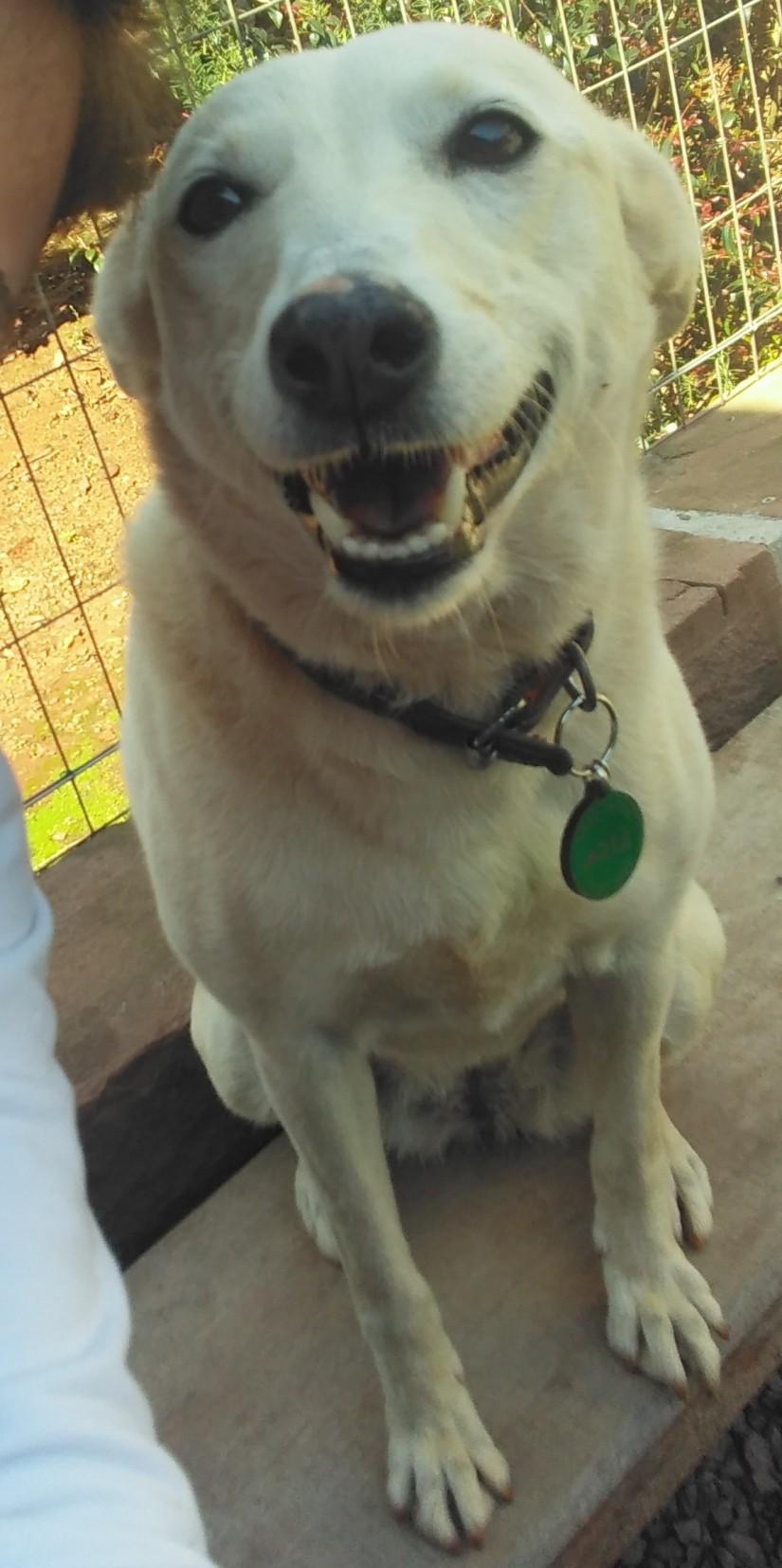LISA (Canino fêmea) Srd Mp C3
