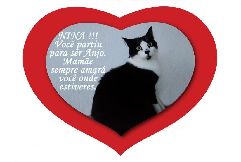NINA (Felino fêmea) Srd C1