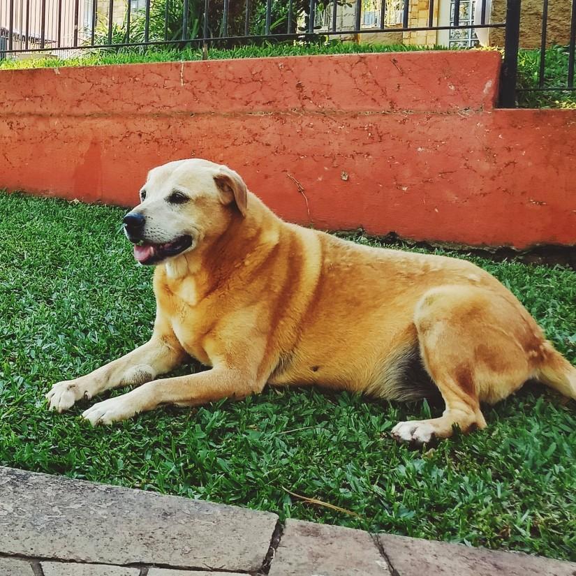 BONO (Canino macho) Srd Gp C4