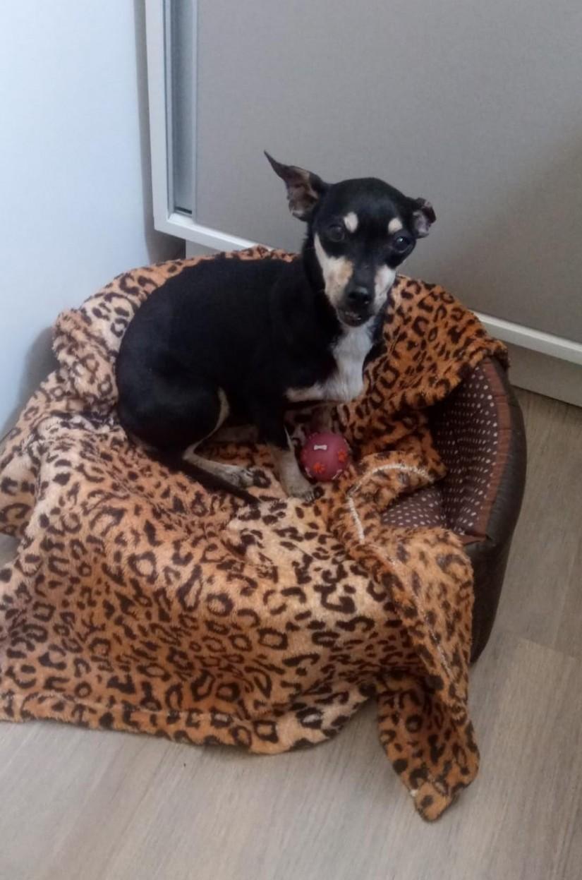 PRETA (Tinha) Canino fêmea (Srd Pp)